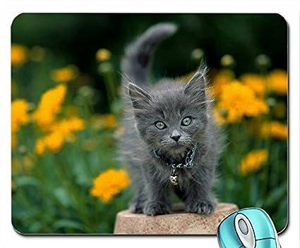 Animales flores gatos animales naranja hierba gris al aire libre cuello gatitos de 1600 x 1200