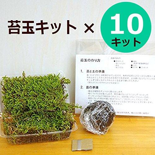 さあ苔玉(こけだま)を作りましょう!【苔玉作成キット】×10キット B079MDM7W6