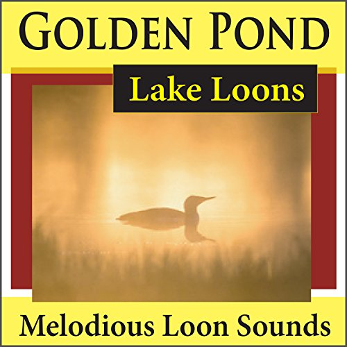 (Golden Pond Lake Loons (Melodious Loon)