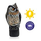 Lijo Solar Owl Animal Scarecrow - Motion Activated Owl Decoy with Sound and Flashing Eyes, Realistic Decor for Your Garden, Bird Repellant, 16 inches, New and Improved