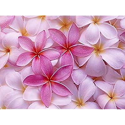 Pink Plumeria Hawaiiane 4 Plant Cuttings - Shrubs Home Garden tkega : Garden & Outdoor