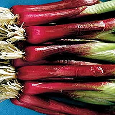 Red Baron Scallion Seeds (40 Seed Pack) : Garden & Outdoor