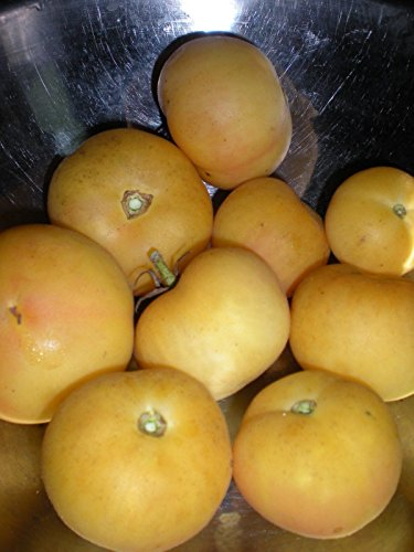 Peach Tomato - Peach Tomato - Low Acid - 20 Seeds! Combined S/H! See Our Store