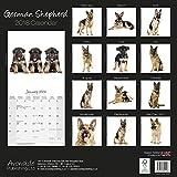 German Shepherd Calendar - Calendar German Shepherd - Dog Breed Calendars 2018 - Dog Calendar - Calendars 2017 - 2018 wall calendars - 16 Month Wall Calendar by Avonside Studio