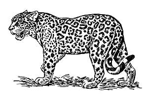 4 unidades 14 x 10 cm brillante pegatinas de dibujo Jaguar