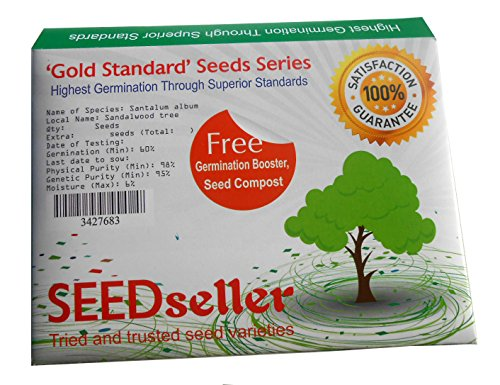 SEEDseller Sandal Wood Santalum Album Seeds from South India (100 Seeds)