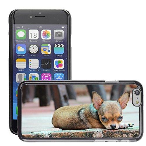 "Just Phone Cases Hard plastica indietro Case Custodie Cover pelle protettiva Per // M00129238 Puppy Dog Pet Race Chihuahua // Apple iPhone 6 PLUS 5.5"""