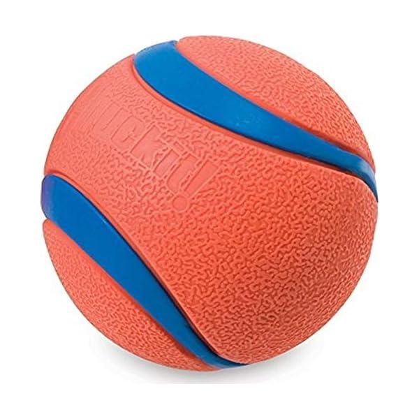 Chuckit Ultra Ball, Durable High Bounce Rubber, Launcher Compatible, 2 Pack, Medium 1