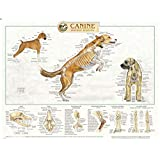 Canine Anatomy Laminated Chart Set of Three, LFA # 92510