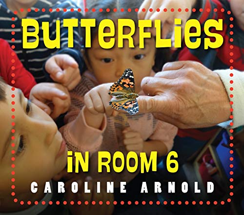 Butterflies in Room 6: See How They Grow (List Of Science Projects For Class 6)