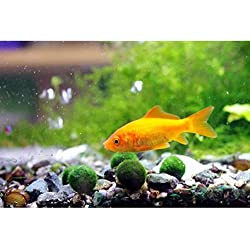 "6 Nano Luffy Moss Balls - 0.6"" Marimo for Community Fish Tanks - Absorbs Nitrates & Provides Oxygen in Aquariums: Needs Minimal Care: Perfect for Neon, Tetra, Guppies, Playts & Molly"