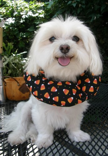 Puppy Bumper - Keep Your Dog on the Safe Side of the Fence-HALLOWEEN Candy Corn, -