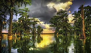 product image for Lafayette, Louisiana - Bayou & Tree Reflections at Sunset A-9006705 (24x36 Signed Print Master Art Print - Wall Decor Poster)