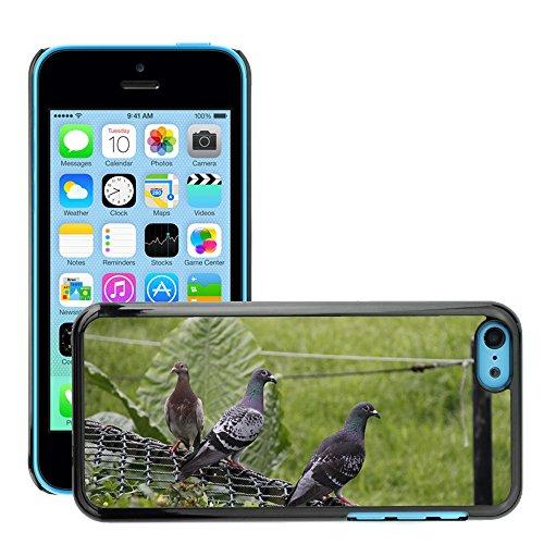 Just Phone Cover Hard plastica indietro Case Custodie Cover pelle protettiva Per // M00138388 Pigeon Oiseau Zoo fraîche et naturelle // Apple iPhone 5C