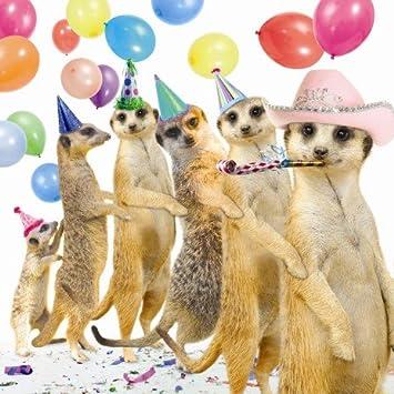 Conga Meerkats Birthday Card Amazon Office Products
