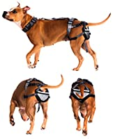 PABS Dog Chastity - Chastity for Dogs - Pet Anti-Breeding System Storage Travel Bag - Dog Period Pads Option Available