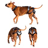 Chastity Belt for Dogs - Pet Anti-Breeding System (PABS), Medium