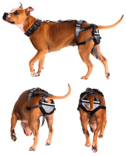 PABS Chastity Belt for Dogs - Pet Anti-Breeding System, Humane Birth Control Protects Against Breeding, Large with 4 Sani-T Pad