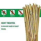 Mininfa Natural Bamboo Stakes, Eco-Friendly