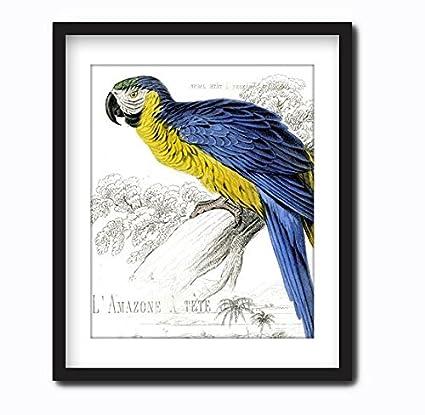 Amazon.com: Blue Parrot Wall Art Canvas Print Framed Bird Art ...