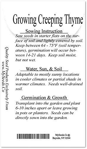 1oz (220,000+ Seed) x CREEPING THYME Herb Seeds Thymus Serpyllum ~ Butterflies love it so will U - By MySeeds.Co by MySeeds.Co - BIG PACK Seeds (Image #3)