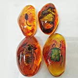 VORCOOL 5pcs Amber Fossil with Insects Samples