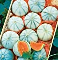 David's Garden Seeds Fruit Cantaloupe Savor (Orange) 25 Hybrid Seeds