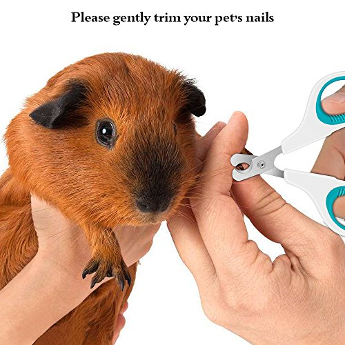 KAISHUITANGJIBA Pet Nail Clippers Small Animals, Easy to Use Nail Trimmer Toenail Clippers - Sharp Cuts Safety Guard so You can Clip Confidence - Blue White by KAISHUITANGJIBA (Image #6)
