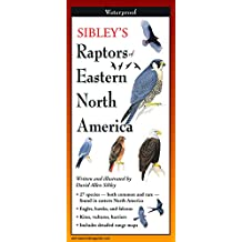 Sibley's Raptors of Eastern North America - Folding Guide