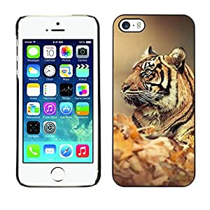 Hot Style Cell Phone PC Hard Case Cover // M00100593 animals tiger // Apple iPhone 5 5S