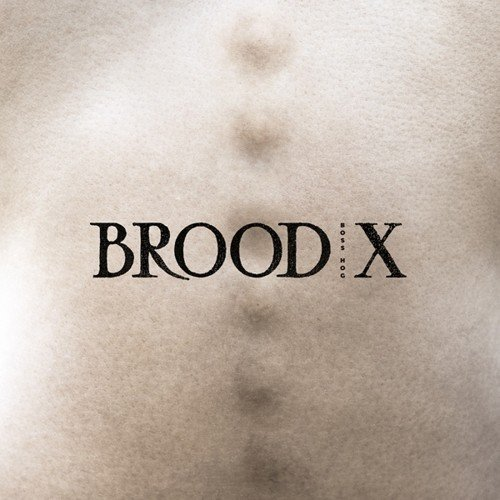 Price comparison product image Brood X