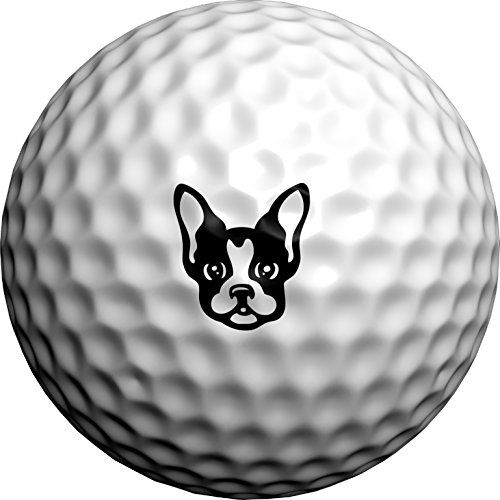 Golfdotz Boston Terrier