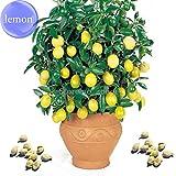 2018 Hot Sale Rare Lemon, 20 Seeds, Balcony Patio Potted Fruit Trees Planted Seeds E3580