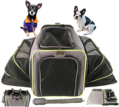 Airline pet carrier backpack pet carrier for dog and cat for Small dogs on airplanes
