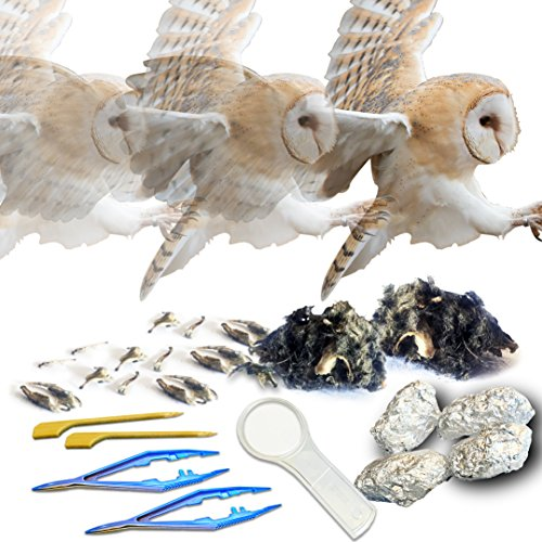 Amazing Owl Pellet Dissection Kit – 6-Piece Owl Pellet Set for Science Lab Projects – w/Tweezers, Magnifying Glass and Wooden Probes – Ideal for Kids, Class Projects – Bonus Barn Owl eBook by Evviva Sciences (Image #6)