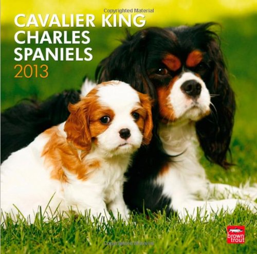 Spaniel 2013 Calendar - Browntrout 9781421697840 Cavalier King Charles Spaniels 2013 Square 12X12