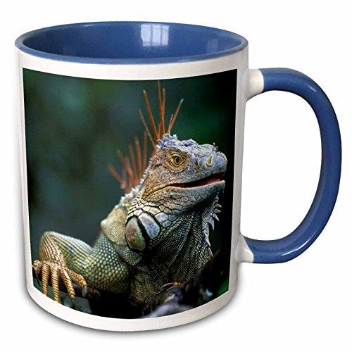3dRose 87260_6 Costa Rica, Muelle San Carlos, Iguana lizard-SA22 PSO0005-Paul Souders Two Tone Blue Mug, 11 oz, White