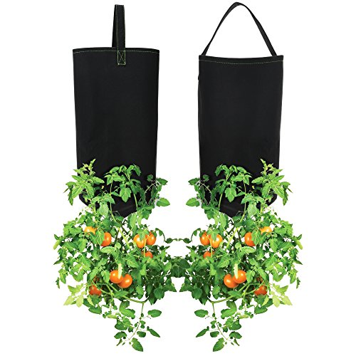 Pri Gardens Upside Down Tomato Planter, (2- Pack) Hooks Included (Requires Fertilizer, not Included) (Best Cherry Tomatoes For Hanging Baskets)