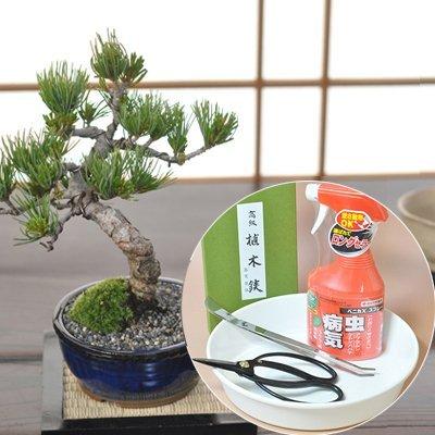 樹齢7年 五葉松の盆栽とはじめての道具セット B01FS7BUD0