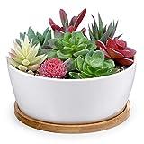 6 Inch Modern White Ceramic Round Succulent Cactus