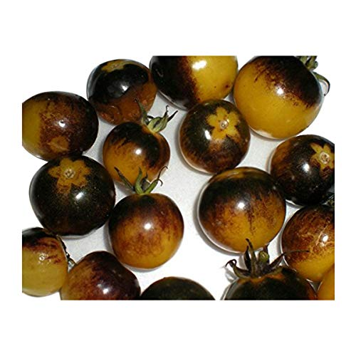 Potomac Banks Rare Small Bumble Bee Heirloom Tomato Seeds (25 Count) (Comes with Free How to Live Stress Free Ebook) -