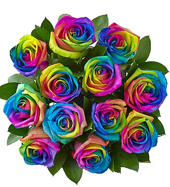 Tinted Rainbow Roses| 50 cm. long (20'') 50/100/200 (50)