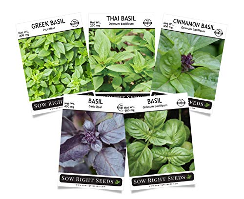 (Sow Right Seeds - Basil Seed Collection - Genovese, Greek, Opal, Thai, and Cinnamon Basil to Plant, Non-GMO Heirloom Seeds with Instructions for Planting, Indoors or Outdoor; Great Gardening Gift)