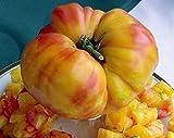 Big Rainbow Tomato 50 Seeds - Heirloom