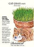 Cat Grass (Oats) Seeds - 15 grams - Botanical Interests