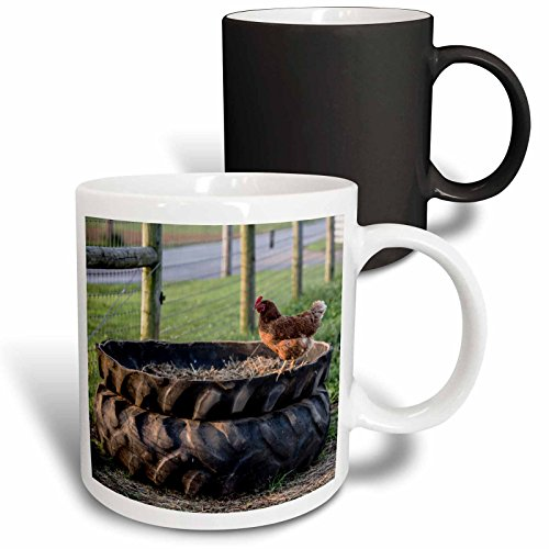 3dRose Danita Delimont - Chickens - Rhode Island Red hen ...