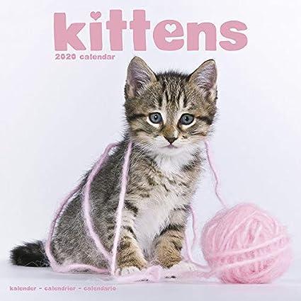Calendario 2020 gato con póster – gatos – gato – gato – felino – formato 30 x 30 cm (TN) + agenda de bolsillo 2020: Amazon.es: Oficina y papelería