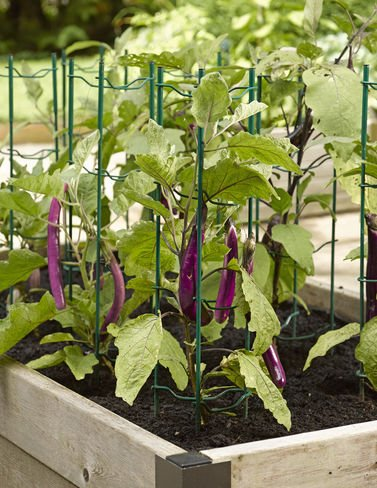 Pepper Eggplant Stakes Set 3