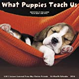 2018 What Puppies Teach Us Wall Calendar Pups Puppy Dogs CUTE {jg} Great Holiday Gift Ideas - for mom, dad, sister, brother, grandparents, gay, lgbtq, grandchildren, grandma.