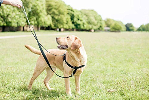 Buy small dog harness review